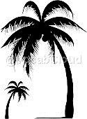 palm tree Image